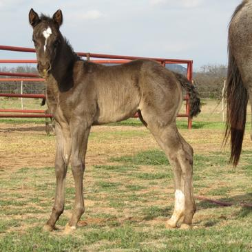 Blue Valentine filly