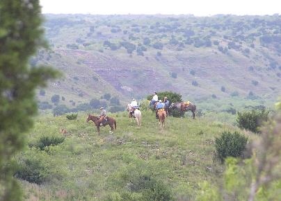 Horses on a cattle roundup